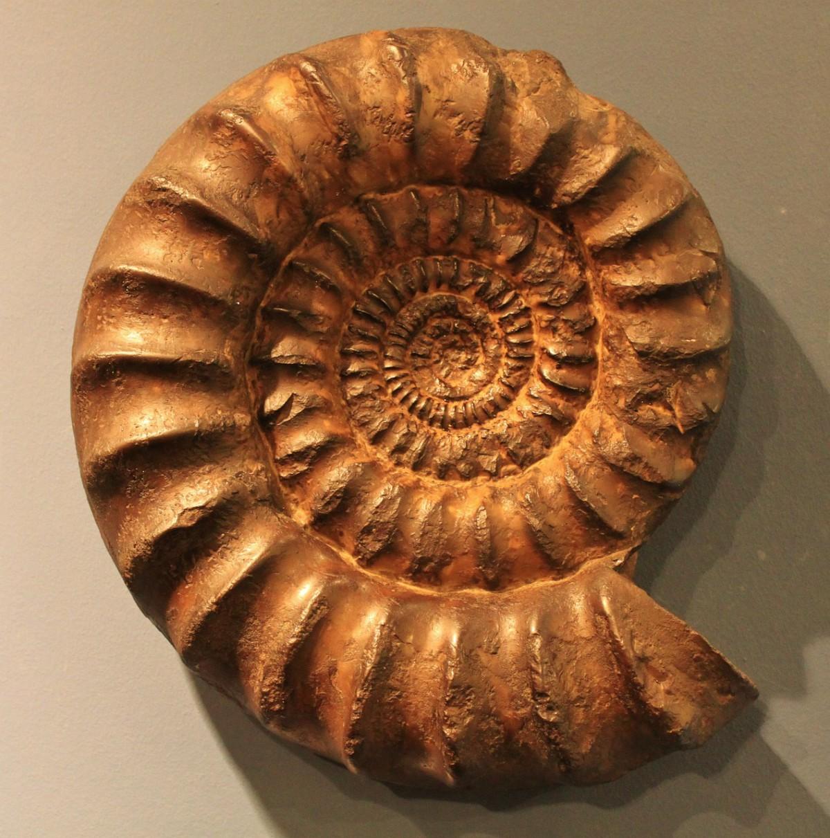 ammonit-321695_1280